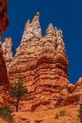Bryce Canyon NP | Hoodoos and Conifer (Facundity) Tags: vertical utah sandstone scenic erosion hoodoos conifer navajoloop brycecanyonnp geologicformation canoneos70d verticaliandscape