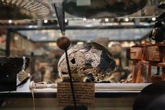 QF4C7790 (leslilundgren) Tags: skull pittriversmuseum