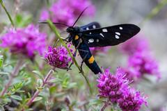 IMG_0819-270 (Martin1104) Tags: fotografie natuur bergen landschap vlinders yagodina snp bulgarije natuurfotografie natuurreis