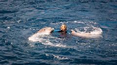 Dance with the Dolphins (rafa.esteve) Tags: espaa water valencia aquarium spain dolphin 16x9