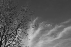 DSCF2169 (tatsuhiko_oga) Tags: cloud branch