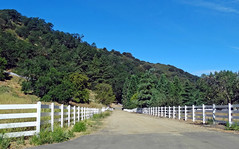 Home in theTrees, Oak Glen, CA 7-8-16 (inkknife_2000 (6.5 million views +)) Tags: trees forest whitefence woodfence countryliving oakglenca inlandempireca woodedhills dgrahamphoto