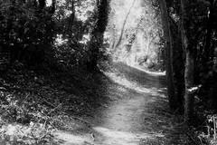 Cuxton Community Woods2 (Rock Webb) Tags: blackandwhite bw film nature monochrome woodland landscape mono woods scenery noiretblanc hyperfocal rangefinder analogue manualfocus panf beautifulearth manualexposure blackwhitephotos
