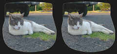 Cyber Chill'n 2 - Crosseye 3D (DarkOnus) Tags: closeup cat stereogram 3d crosseye feline phone pennsylvania cell stereo stereography buckscounty cyber huawei crossview mate8 darkonus
