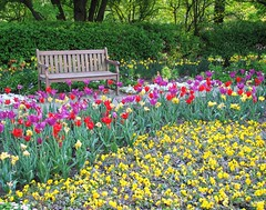 Sit Among the Tulips (Cher12861) Tags: red yellow bench landscape purple tulips wheatonillinois cantignygardens spring2016