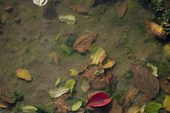 (www.tokil.it) Tags: milano italia italy pozzanghera puddle foglie leaves colori colors acqua water terra ground autunno autumn naturaurbana urbannature nikond90