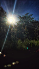 19/07/2016 day 331 : summer sunrise (shaye.photo@yahoo.fr) Tags: light sky sun backlight sunrise landscape outdoors person no sunny illuminated flare figurine miss contrejour meteo iphone project365 365days 500px 365photos iphonephoto shotoniphone missmeteo ifttt iphone6s