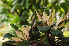 FOGLIE NELLA FORESTA    ----    LEAVES IN THE FOREST (Ezio Donati) Tags: natura nature foglie leaves fiori flowers nikond810 africa cameroun areayaounde foresta forest verde green