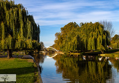 Summer River (Rob Felton) Tags: thegreatouse theembankment embankment river bedford bedfordshire robertfelton felton willow reflection tree water salix scenic outdoor view