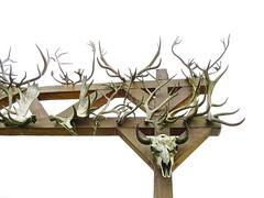 portage - AK - USA (Greenes Music) Tags: skulls alaska creepy mounted wildlifeconservationcenter bones antlers