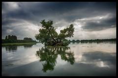 Beautiful nature (Menno Damste) Tags: biesbosch brabant drimmelen national park natuur nature water clouds sun relfectoin