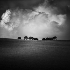 A bustle in your hedgerow (vulture labs) Tags: vulture labs wwwvulturelabsphotography