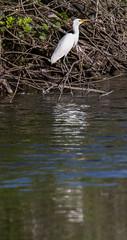 _C5A3864.jpg (Lake Worth) Tags: bird nature birds animal animals canon wings wildlife feathers sigma waterbird wetlands everglades waterbirds southflorida 2xextender