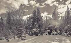 The back woods of beautiful Maine (cke photo) Tags: autumn trees winter light sky blackandwhite bw cloud snow tree art nature beautiful clouds rural forest woods pretty acrylic skies unitedstates cloudy fineart maine scenic newengland wallart serene lovely bnw clearsky lightroom blackandwhitephotography blackandwhitephoto clearskies ruralphotography artamerica mainephotography bnwphoto bnwphotography fineartamerica