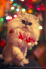 """""""Happy Christmas to all, and to all a good night!"""" (A Great Capture) Tags: christmas xmas eve winter pet toronto ontario canada tree cat lights persian chat kitty chia merry merrychristmas himalayan chichi on perisan lhiver ald ash2276 ashleyduffus"""