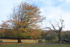 Urbasa, udazkena(11) (orko_eh) Tags: autumn otoo zb euskalherria basquecountry paisvasco navarre navarra paysbasque nafarroa urbasa udazkena josugaintza d200orkoeh