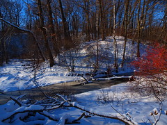 Frozen.                                        PC307571 2 (Is-Be -Thank You All for over 1,400.000 views.) Tags: trees winter red snow ice apple creek frozen flickr bluesky winterinhighparktoronto