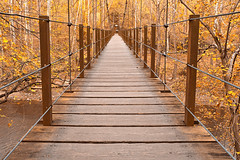 park wood travel bridge autumn trees orange usa fall tourism nature beautiful beauty leaves lines yellow metal architecture america forest river landscape gold golden wooden woods scenery colorful warm glow state bright image suspension grove path vibrant background branches united stock scenic picture corridor warmth free surreal maryland scene symmetry foliage fantasy american nicolas valley symmetric symmetrical glowing dreamy raymond states colourful suspended railing passage epic planks hdr resource touristic patapsco somadjinn freestockca