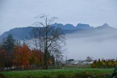 Pitt Meadows BC (Ian Threlkeld) Tags: autumn dykes canada fall nature fog landscapes nikon scenery bc mapleridge foggymorning pittmeadows alouetteriver ridgemeadows northalouetteriver d7000 alouetteriverdykes