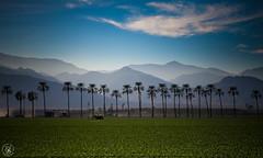 Coachilla Valley (SBurrage) Tags: desert palmsprings palmtrees coachilla