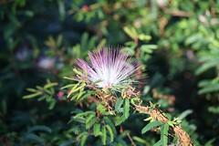 (Vagner Eifler) Tags: flores brasil natureza flor portoalegre riograndedosul belémnovo