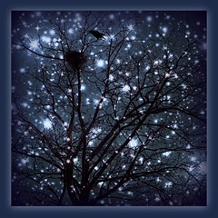 Out in the starlight! (Marcia Portess - Busy busy but back soon.) Tags: blue trees winter birds night stars noche arboles branches silhouettes aves nighttime estrellas crows siluetas nests starlight nidos marciaportess marciaaportess outinthestarlight