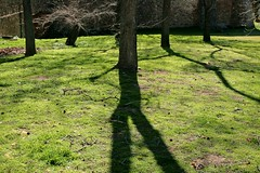 Shadow tree (sonisa6) Tags: light shadow naturaleza tree verde nature arbol plantas rboles shadows cesped