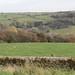 Yorkshire Moors_9510