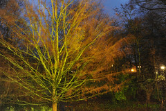 the-wind-in-the-willows (Don Pedro de Carrion de los Condes !) Tags: storm wind time herfst boom fx beweging donpedro kleuren tijd d700