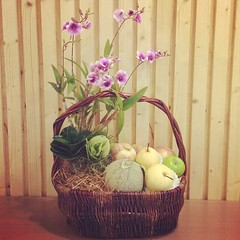 กระเช้าผลไม้จัดรวมกับสวนถาดเล็กๆ #fleur #flora #floral #flower #flowers #fruits #florist #choosing #creating #presenting #arranging #arrangement #basket #mini #miniature #floraldesign #floraldesigner #flowerbangkok #Bangkok #th #thailand