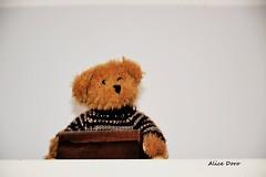 Un p di tenerezza (alicedoro1) Tags: bear baby teddy teddybear peluche pupazzo orsetto tenerezza