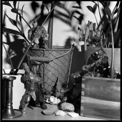Masters in den Blumen (Bi&Me) Tags: bw masters expired motu mastersoftheuniverse hasselblad500cm epsonv700 selbstentwickelt r09oneshot kodaktmaxprofessional400 carlzeisssplanarf120mm156