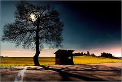 Wooden bus stop Schickel Mill 1959 (piontrhouseselski) Tags: sun tree history uranium cz moravia dolni rozinka