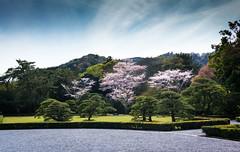 DSC07478 (Ustulo) Tags: japan spring ise iseshi isegrandshrine