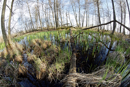 Marshy patch right by Hjälmaren