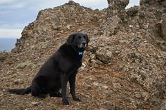 4mai_Thorbjorn_069 (Stefn H. Kristinsson) Tags: dog mountain dogs iceland spring hiking may ma vor hundur sland ganga fjallganga tamron2875mm grindavk hundar grindavik orbjrn nikond800 thornbjorn orbjarnarfell