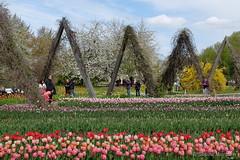 Paradiesischer Britzer Garten (Sockenhummel) Tags: park garden spring fuji tulips finepix fujifilm garten x30 frhling tulpen buga britzergarten tulipane grnberlin fujix30
