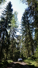 Forrestroad (Mange J) Tags: road wood tree car pinetree pine se forrest sweden sony wheels cellphone citron sverige coupe z3 pinetrees vag vg c4 cellpic vrmland carspotting forrestroad xperia vrmlandsln d5803 fotosondag magnusjakobsson fs160515