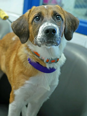 Dilly_03 (AbbyB.) Tags: dog pet animal newjersey canine doggy shelter shelterpet petphotography easthanovernj mtpleasantanimalshelter