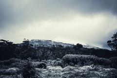 Paul Brandon Overland 2016 (12 of 140) (Paul Brandon  Rambling House Photography) Tags: mountain snow mountains walking nikon rainforest hiking australia tasmania cradle iphone