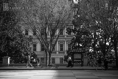 Washington DC | Instagram: @bayanalsadiq (Bayan AlSadiq) Tags: travel trees light usa sunlight green nature beauty dc washington shadows places