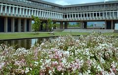 Academic Quadrangle Roses (jvde) Tags: 3570mmf3345nikkor burnaby coolscan film fujicolor nikon nikonfe rose sfu gimp