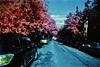 new york, usa (bill bold II) Tags: usa newyork film 35mm infrared colorinfrared expiredfilm homedeveloped kodakeir olympusom2n fujixpressc41