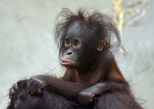Ich hab die Haare schön!