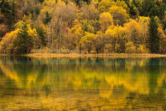 The Reflection of autumn forest in Jiuzhaigou. (baddoguy) Tags: autumn lake reflection tree water horizontal forest landscape outdoors photography leaf nationalpark day tranquility nopeople copyspace jiuzhaigou traveldestinations colorimage autumncollection chinaeastasia