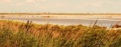 Le marais salant (jrco31) Tags: sel paysage marais languedocroussillon saintelucie portlanouvelle