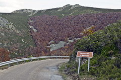Hayedo de La Predrosa (ipomar47) Tags: wood españa forest spain woods pentax bosque segovia beech k5 haya riaza pedrosa castllaleon