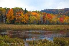 Painted - Autumn colors - Looking West along Schooner Head Road (RichHaig) Tags: me maine autumncolors fallfoliage acadia barharbor mountdesertisland mdi acadianationalpark gitzotripod nikond800 nikonnikkor24120mmf40