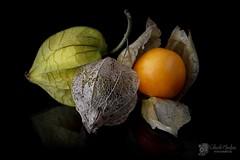 Physalis peruviana (Chencho Mendoza) Tags: bodegón physalis fruto uchuva peruviana aguaymanto chenchomendoza
