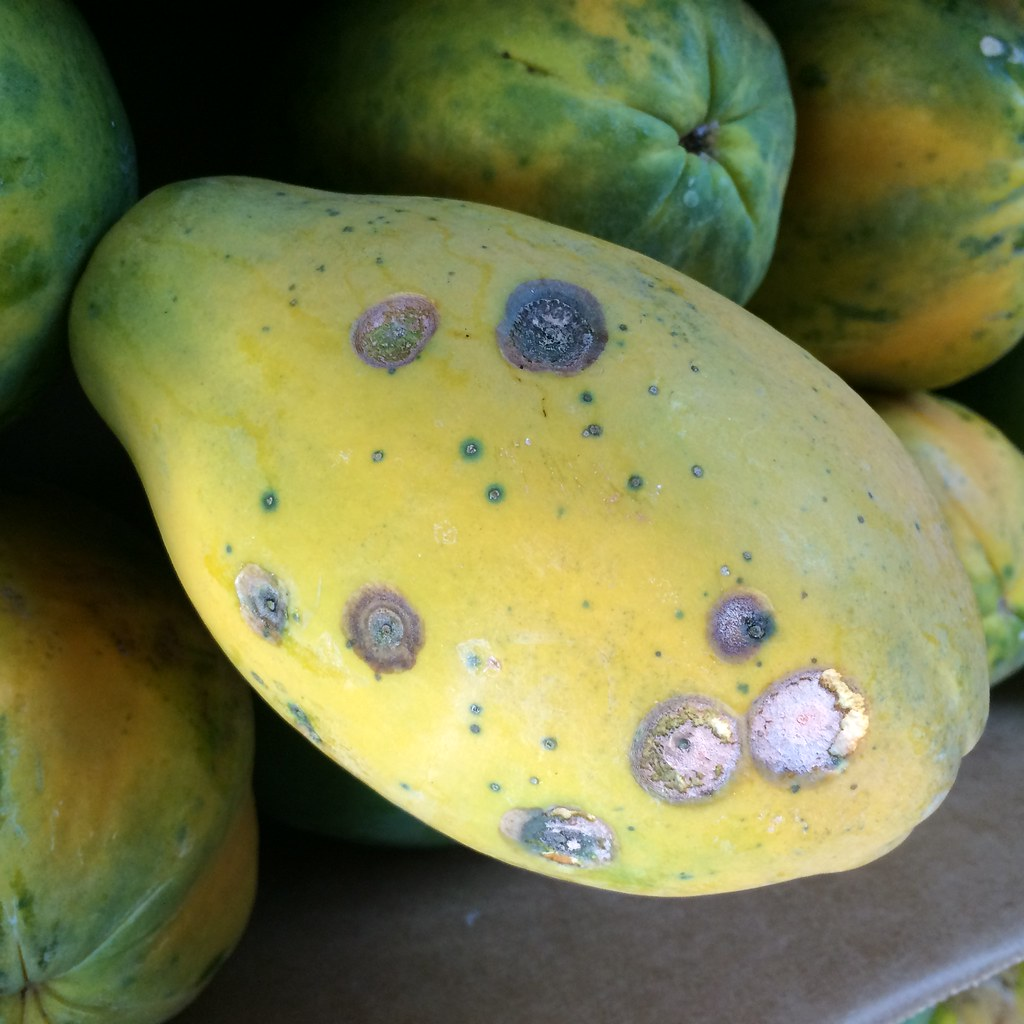 papaya reseach paper Research paper - calamansi (citrofortunella microcarpa) fruit extract as perfume 1 1 introduction background of the study scent has a lot to do with how people react towrads people.